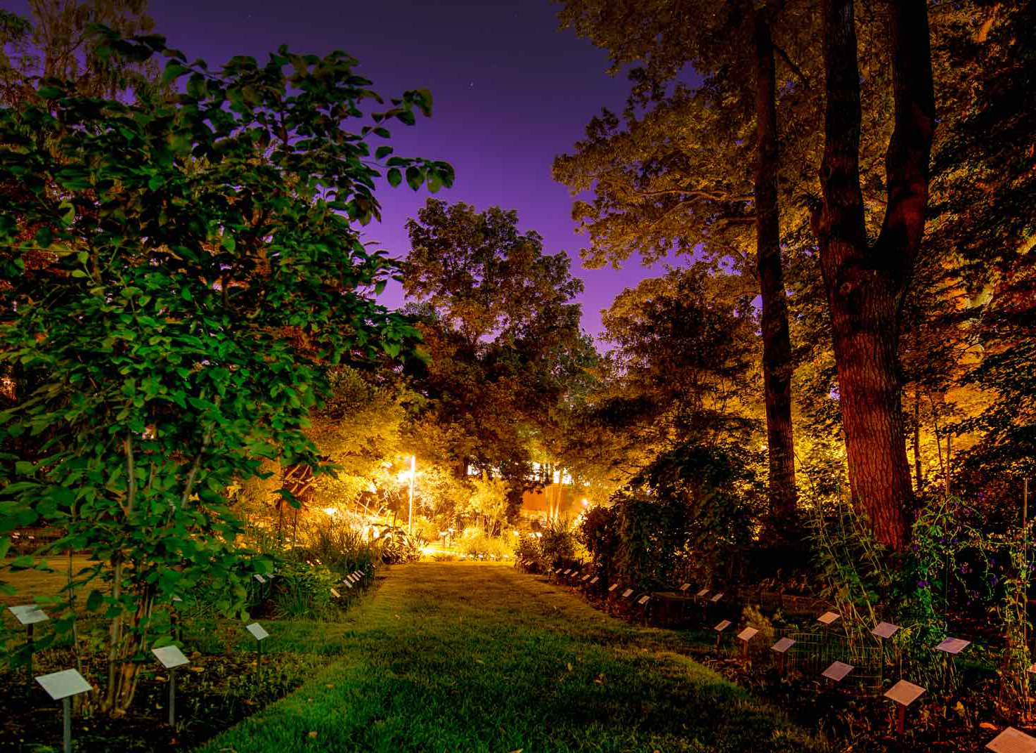Beal Garden glows with a pink and purple sky